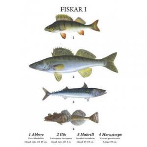 Grunne Mindre skolplansch Fiskar - Hus-modern.se