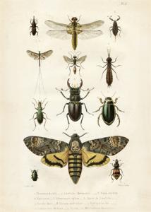 Skolplansch Insekter - Hus-modern.se