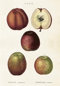 Skolplansch Äpplen - Hus-modern.se