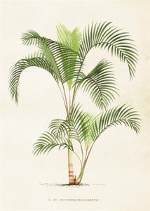 Skolplansch Palm - Hus-modern.se
