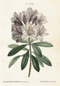 Skolplansch Rhododendron - Hus-modern.se