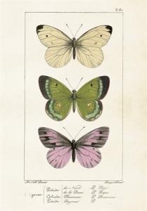 Skolplansch Fjärilar - Hus-modern.se