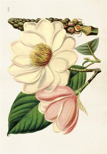 Skolplansch Magnolia - Hus-modern.se