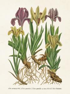 Liten Skolplansch Iris - Hus-modern.se