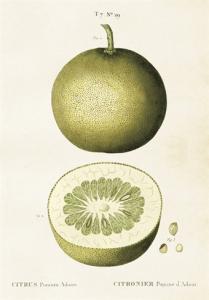 Skolplansch Citrus - Hus-modern.se